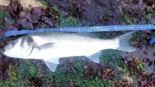 72cm Bass