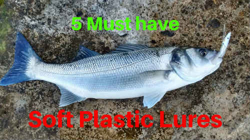 5 Must Have Soft Plastic Lures