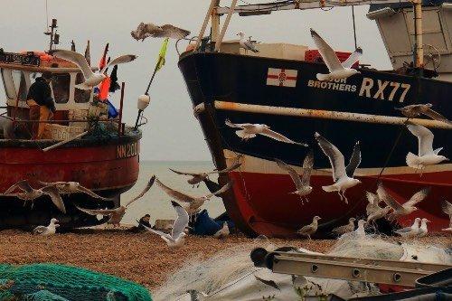 Does Shore Netting Affect Bass Fishing?