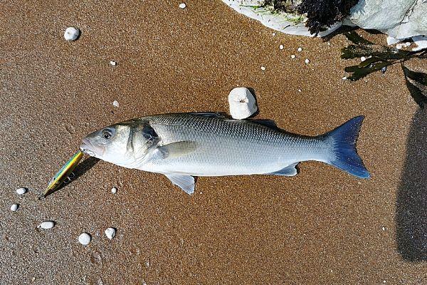 The Amazing Xorus Asturie Bass Lure