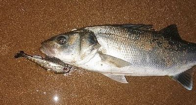 Avoid the Seaweed Bass Fishing With Lures
